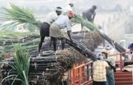 उखु किसानको भुक्तानी नदिने उद्योगी कारबाहीमा पर्न थाले