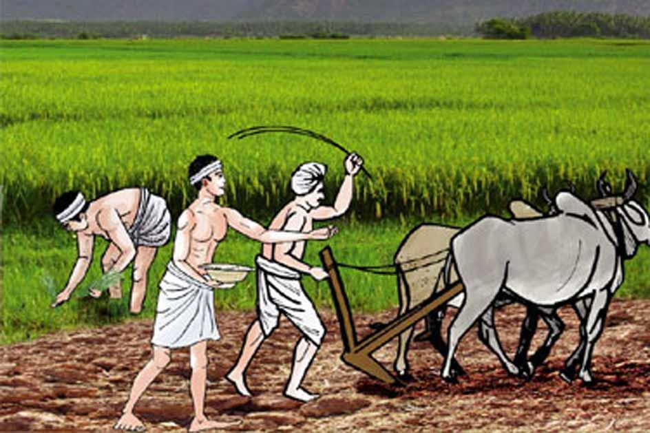 मकै खेतीमा कृषकको ओईरो