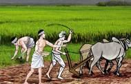 इरी र कृषि मन्त्रालयबीच भयो यस्तो सम्झौँता