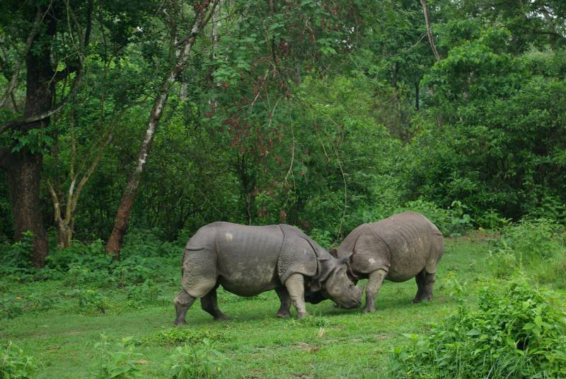 Nepal hands China-bound rhinos
