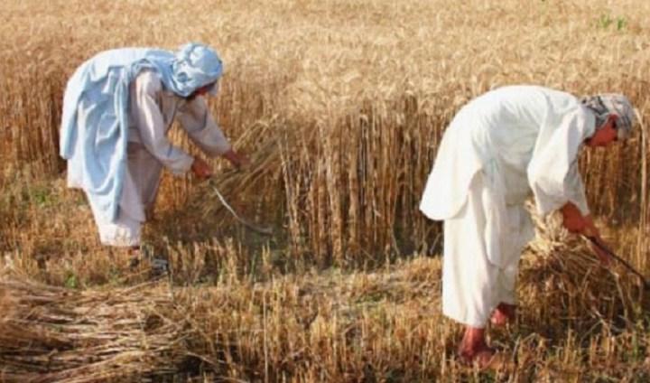 युद्धबाट क्षतविक्षत किसान खडेरीको चपेटामा