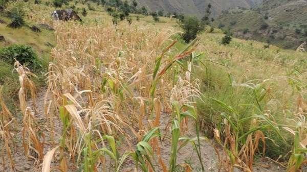 खडेरीको सामना गर्न कृषि बालीको विविधिकरणमा जोड