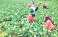 उत्पादकत्व वृद्धि गर्न करार खेतीको आवश्यकता