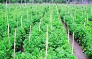 आधुनिक कृषि बजारलाई जग्गा माग