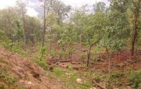 भारताल वन क्षेत्रमा साझेदारी कार्यक्रम लागू