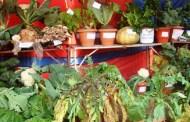अन्तर्राष्ट्रिय कृषि प्रदर्शनीको तयारी पूरा