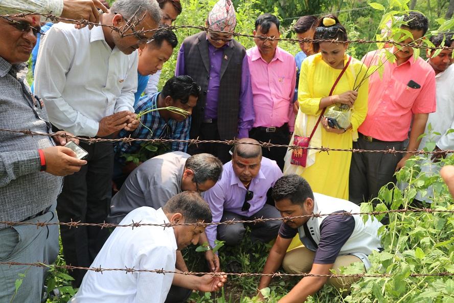 युवा सघ नेपालद्वारा बृक्षारोपण तथा जलपान कार्यक्रमको आयोजना