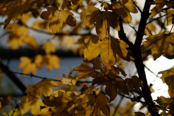 Herbst & Licht & Elbe