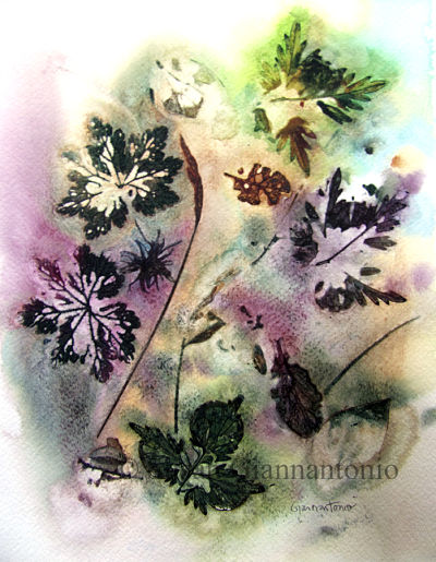 "Mayville Fall 2014 Botanical 2, 12 x 9"" transparent watercolor"