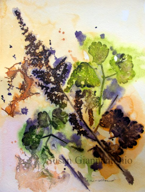 "Mayville Fall 2014 Botanical, 11 x 9"" watercolor on paper"