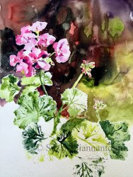 "Sweet Spot Plein Air Geranium, 20 x 16"" transparent watercolor on paper"