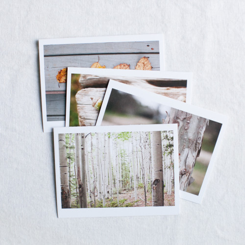 Tiny Tree Studio NOTE CARD COLLECTION ONE