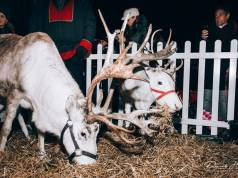 Santa's reindeer at Shoreham