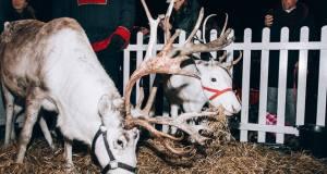 Santa's reindeer at Shoreham