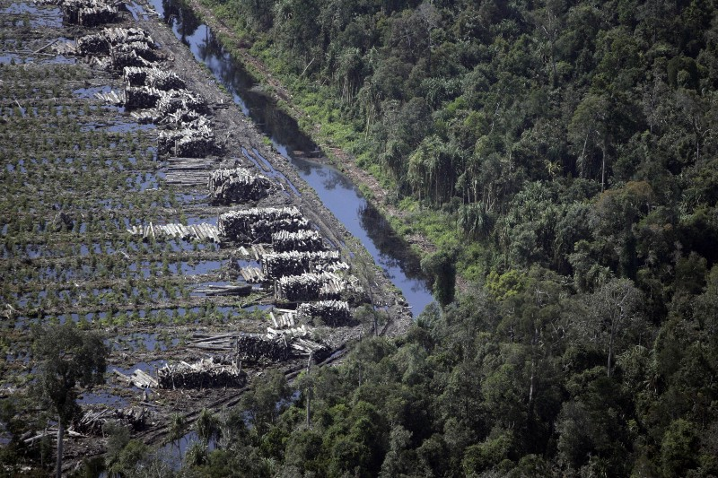 Forests – the Best Carbon Sink Available: Let's Keep it That Way