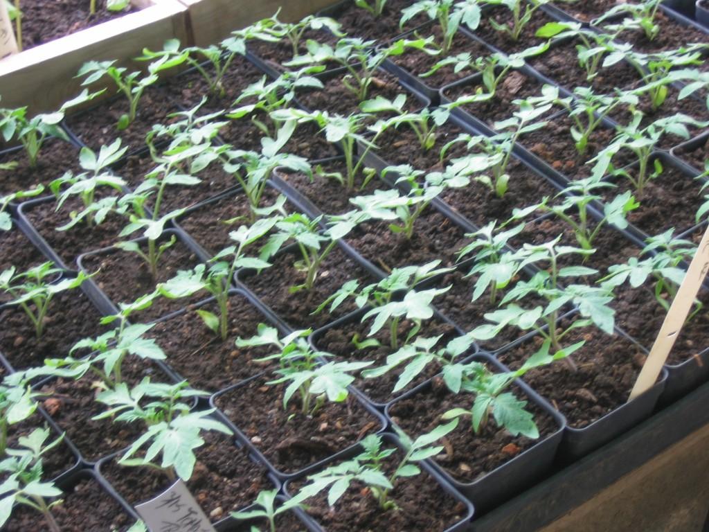 Seedlings Sustainable Market Farming