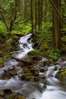 River in Pacific Northwest forest
