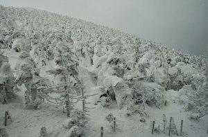 Snow Monsters at Mountain ZAO Yamagata
