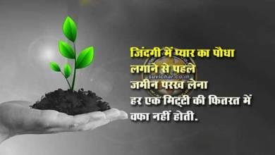 Photo of प्यार का पौधा