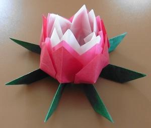 Lotus bloem alle bloem lagen omhoog