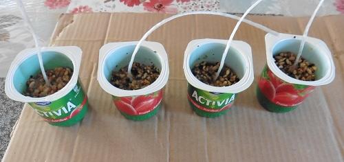 vogelvetbollen-maken-bakjes-allemaal-gevuld