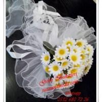 Beyaz Papatya Gelin Çiçeği
