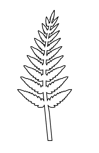 Frond drawing for a faux fern