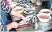 厳選された国産の魚