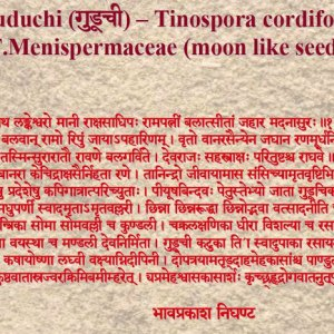 Guduchi - Learn About The Most Divine Herb in Ayurveda