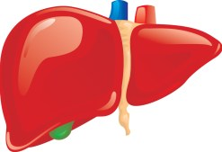 Liver-illustration