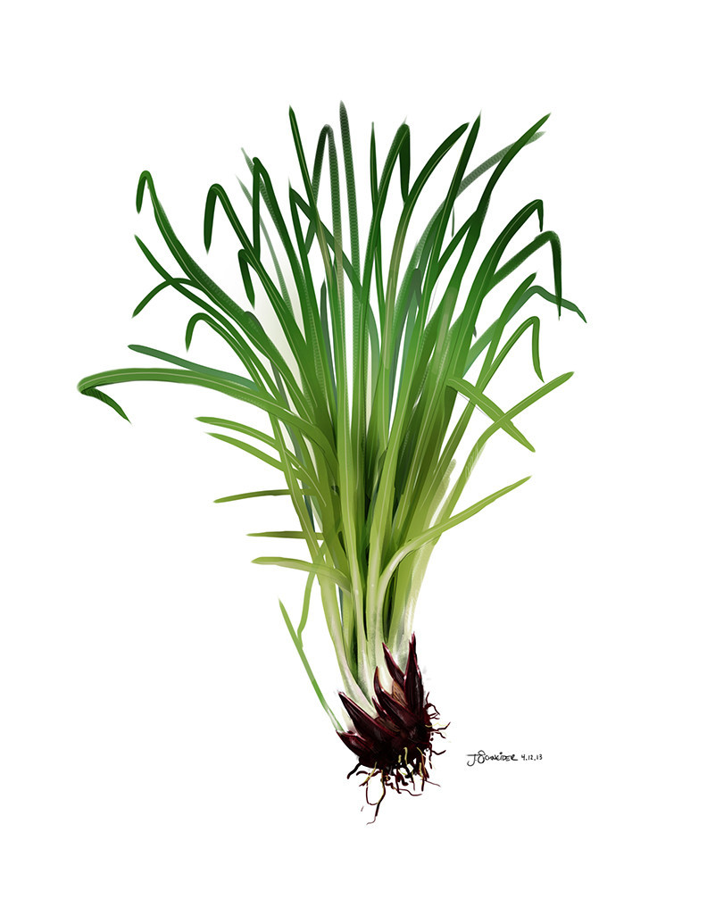 Rose, Jasmine, Sage, Lemongrass, Vetiver, Rosemary, Lavender - SVA