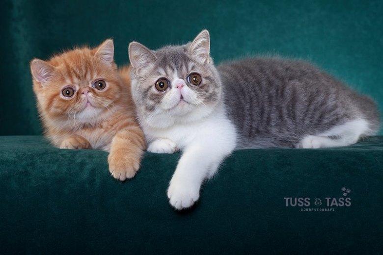 Foto: Tuss & Tass