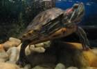 My Pet Turtle 2