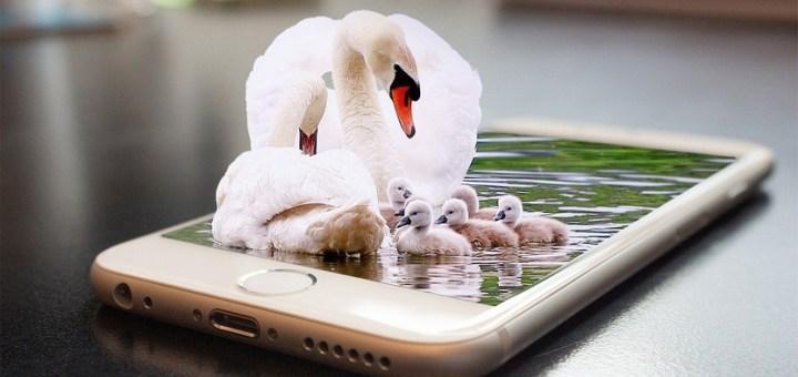 Android Smartphone Mobile Iphone  - mauryamohit138 / Pixabay