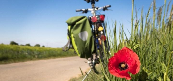 Cycling Poppy Leisure Bike  - Didgeman / Pixabay