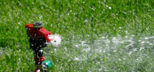 Sprinkler Watering Grass Turf  - Free-Photos / Pixabay