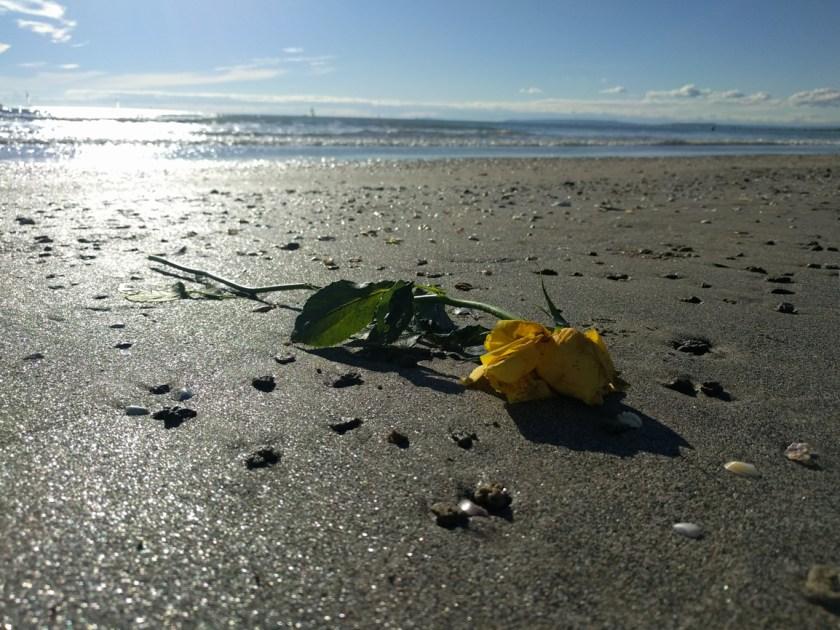 Rose on the Beach-1