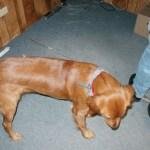 doggie pictures 3-dex, 1-bailey!