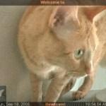 7349 – webcam 091805