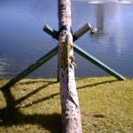 8055 – 12/26/05 bull iguana by the lake
