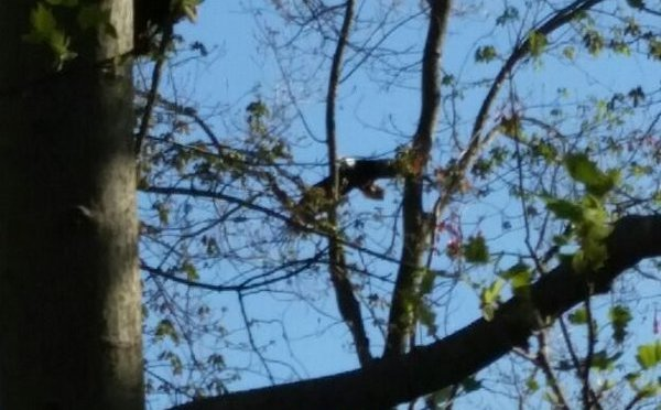 Bald eagles nest up the road. https://t.co/m1wB83hP5U https://t.co/fhjDvfTKK2