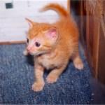 Newton's baby kitten pix