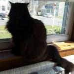 Le Pye Chat Noir