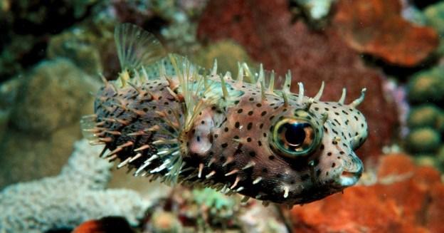 Dive Bonaire