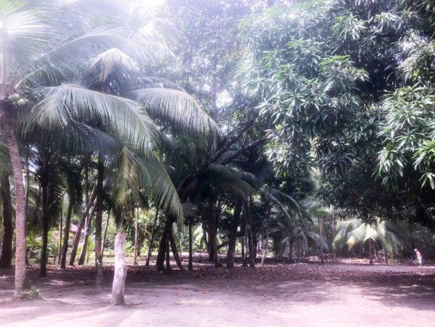 Cocal Plantations