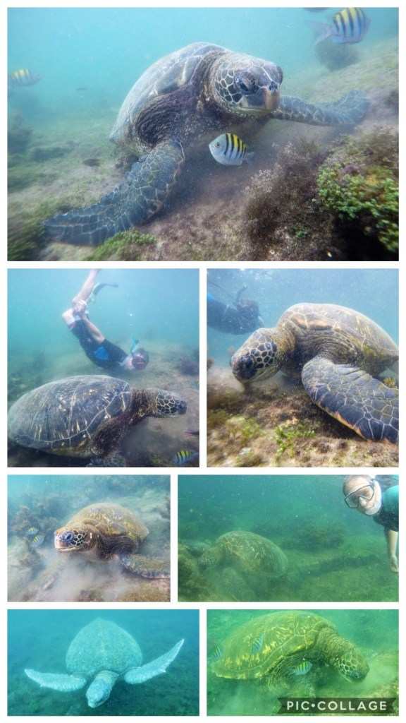 Pacific Green Sea Turtles