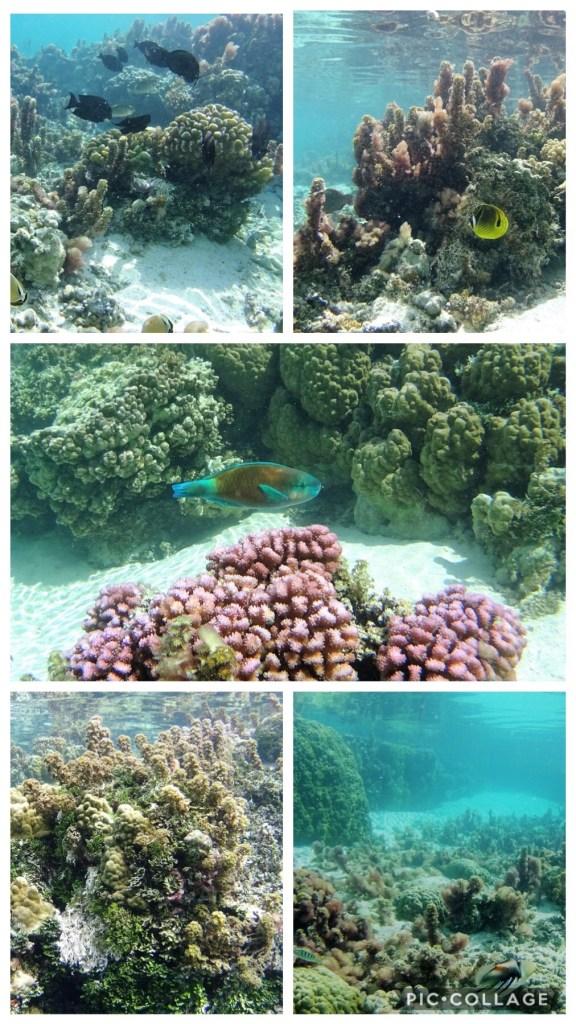 Coral Gardens Underwater Photos