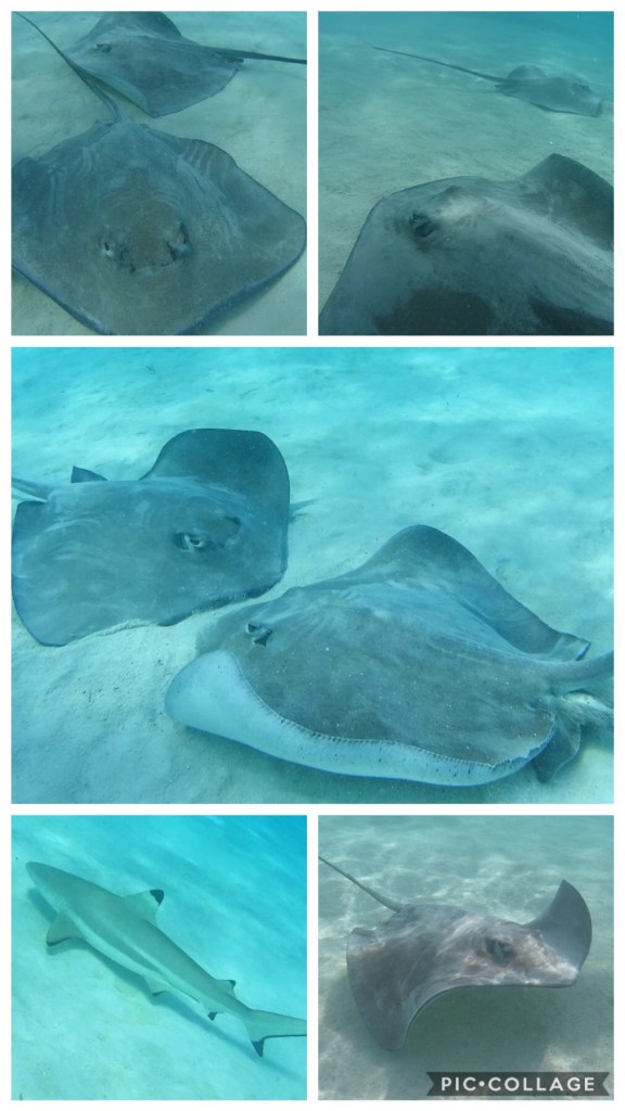 Stingray City Snorkel