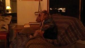 Lola Watching the Olympics