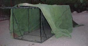 Coyote Trap with Tarp
